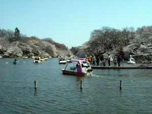 hanami2006-01.jpg